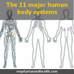11 major human body systems